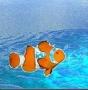 Attento alle possibili TRUFFE - last post by Pescatrice.E